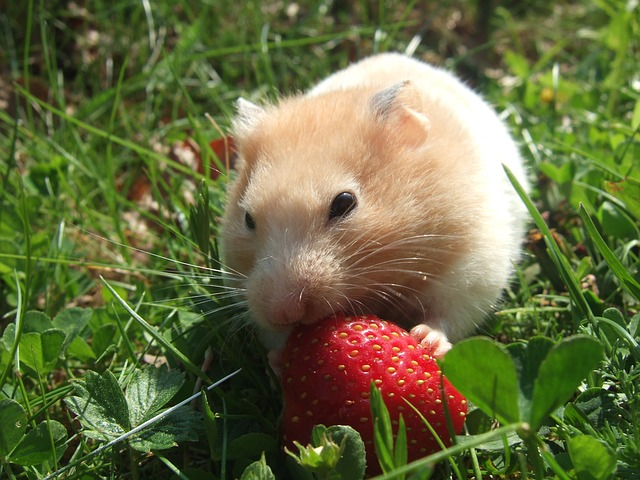 what-food-is-best-for-my-hamster-a